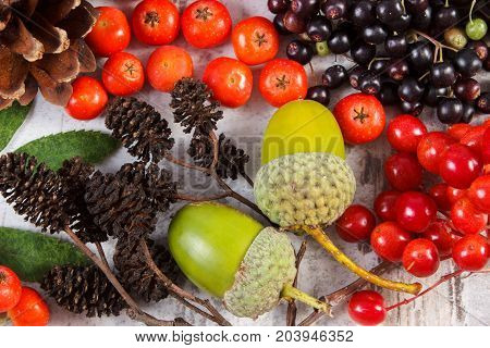 Autumn Fruits Of Forest As Decoration On Rustic Board