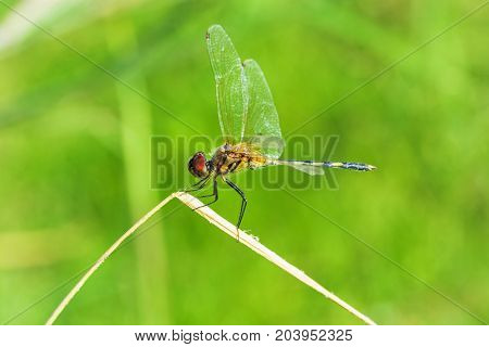 dragonfly outdoor in nature green blurred background