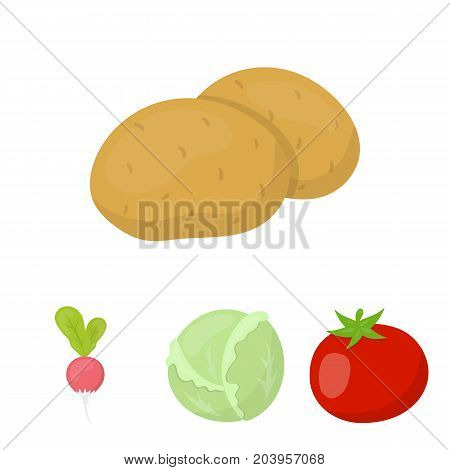 Cabbage white, tomato red, rice, potatoes. Vegetables set collection icons in cartoon style vector symbol stock illustration .