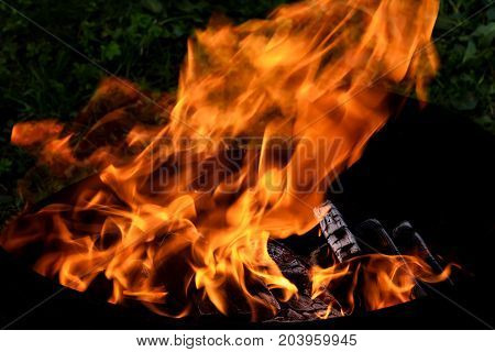 Red and orange flame of a bonfire and black pressed coal in brazier for barbecue on grass background