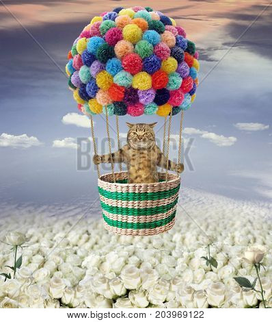 The cat is flying in a hot air balloon over a field of roses.