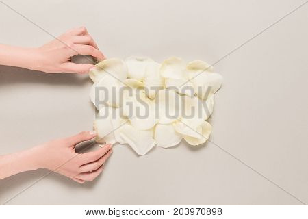 cropped view of hands with white rose petals isolated on grey