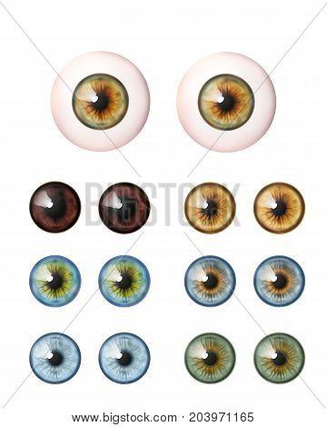 Set of realistic eyeballs. Human eye. Vector illustration collection icon isolated on white.