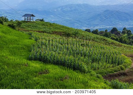 little hut surrounded by crop and corn on top of the mountain in the countryside at Pa Bong Piang near Inthanon National Park and Mae Chaem Chiangmai Thailand.
