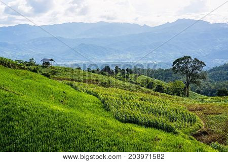 little hut surrounded by crop and corn on top of the mountain in the countryside.