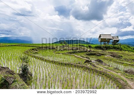 little hut and Rice terrace in a cloudy lighting surrounded by trees and mountains with a raining storm in the background at Pa Bong Piang near Inthanon National Park and Mae Chaem Chiangmai Thailand.