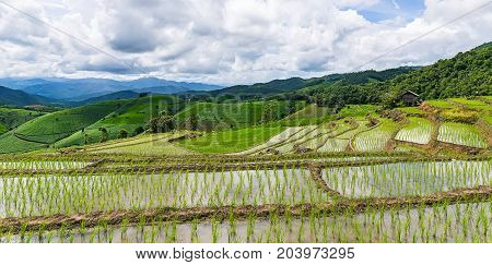 Rice terrace and mountain with the rain storm at the background at Pa Bong Piang near Inthanon National Park and Mae Chaem Chiangmai Thailand.