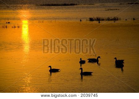 Sunrise Over Big Detroit Lake With Geese