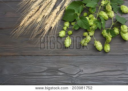 Beer Brewing Ingredients Hop Cones And Wheat Ears On Dark Wooden Table. Beer Brewery Concept. Beer B