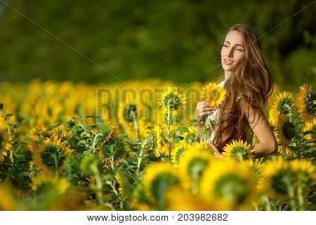 Sunny day woman in a field among blooming sunflowers.