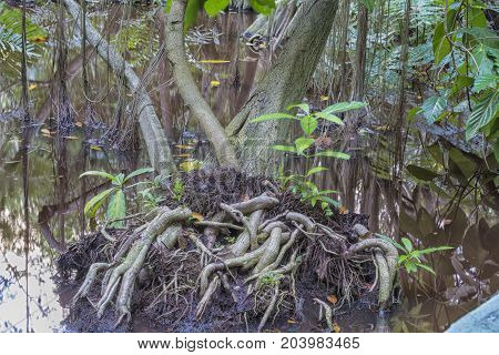 The bog in the primeval forest with rees and plants