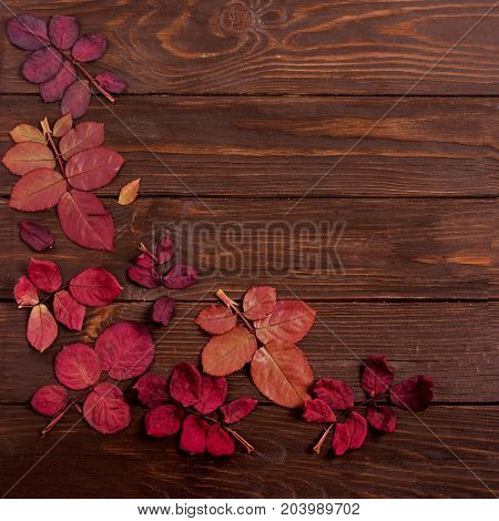 Flat lay frame of autumn crimson leaves on a dark wooden background. Selective focus.