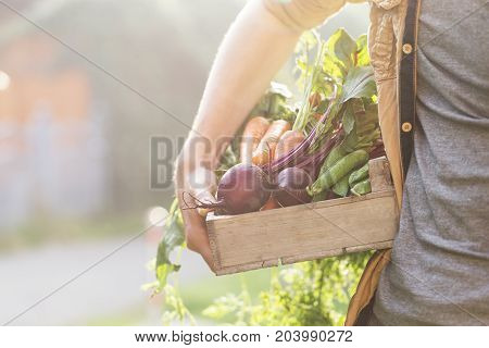 Crop anonymous person holding wooden tray with fresh garden vegetables.