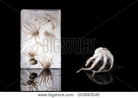 Luxurious seafood pasta. Octopus on black squid spaghetti on black background. Culinary eating.