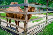 Two humps camel in its pen petting farm zoo outdoors captive animal domesticated brown fluffy poster