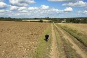 A dog walking in the countryside with a blue cloudy sky poster