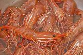 Fresh live shrimp in stainless steel bowl poster