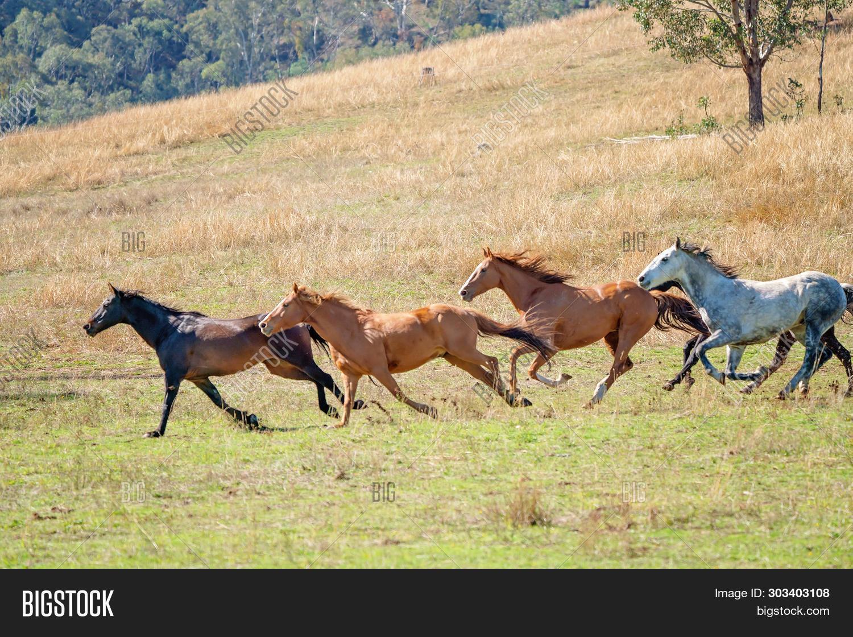 Herd Wild Horses Image Photo Free Trial Bigstock