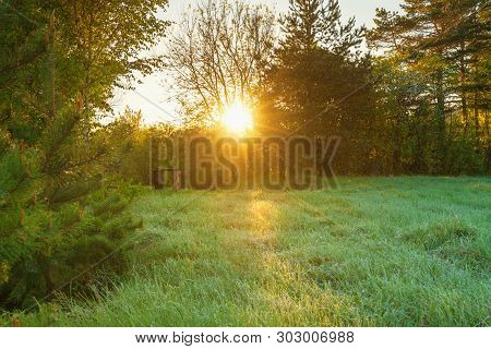 Beautiful Spring Forest Landscape With A Meadow. Sunrise Sun Shines Through Trees.