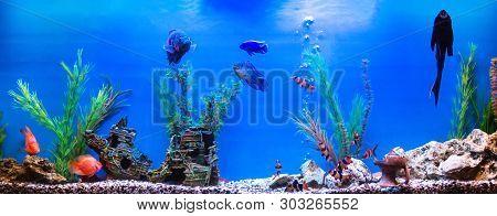 Large Beautiful Aquarium With Colorful Fish, Background, Swimming
