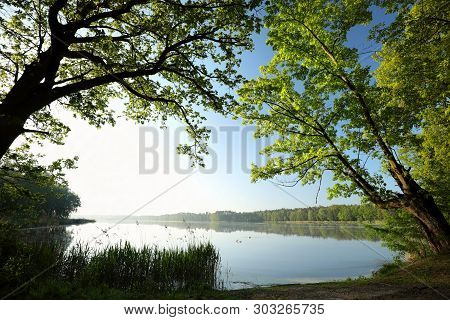 Oak trees on lake shore water spring morning sun. Nature landscape Nature background. Fresh spring tree at sunrise Natural environment Green leaves foliage trees Travel in Nature. Nature background Outdoor at sunrise. Nature background Tree branch at dawn