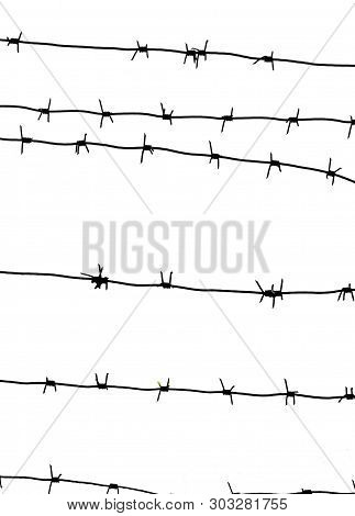 Isolated Barbed Wire On Country Border. Barbwire On Fence For Prohibition Of Illegal Aliens Crossing