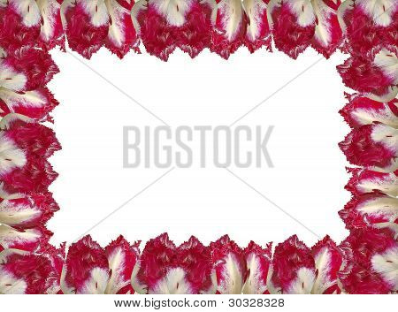 Frame With The Red-white Tulips, Isolated On A White Background.