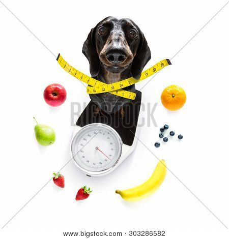 Dog On Scale , With Overweight And Fruit