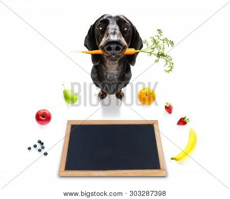 Sausage Dachshund  Dog With Guilty Conscience  For Overweight, And To Loose Weight ,isolated On Whit
