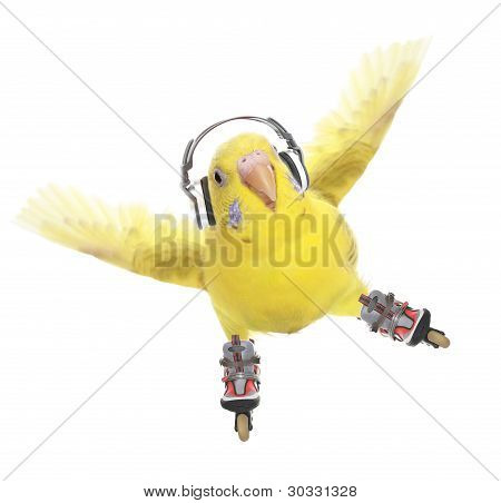 poster of Budgerigar rollerskater in headphones isolated on white background