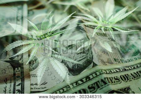 Marijuana Industry Profits Concept High Quality Stock Photo