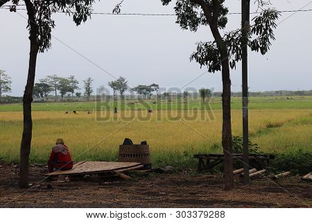 a vast expanse of green rice fields, rural atmosphere, poster