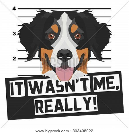Illustration Mugshot Bernese Mountain Dog - The Guilty Dog gets A Police Photo. Dog Lovers And Dog