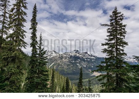 Wild Nature Forest In Joffre Lakes Provincial Park British Columbia Canada.