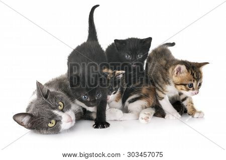 moggy kitten and mother in front of white background poster