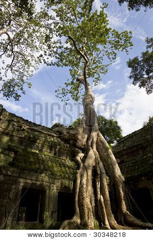 Roots at Ta Phrom Temple