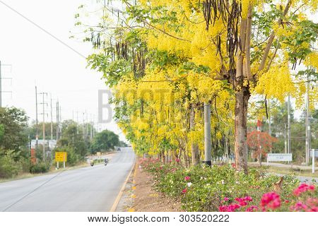 Beautiful Of Cassia Fistula Blooming On The Road, Thailand National Tree.