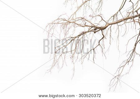 Old And Dead Tree Branch Isolated On White Background