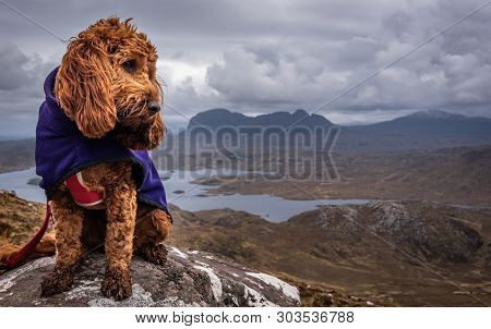 Red Cockapoo Sitting On A Rock