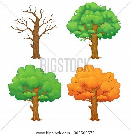 Cartoon Illustration Of A Tree In Different Seasons Isolated On White Background. Leafless Winter Tr