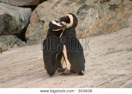 Penguin Kisses