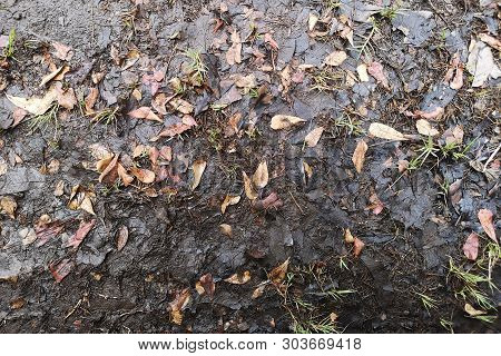 Dry Leaves Covered With Wet Soil Is Decomposed Into Organic Fertilizer.