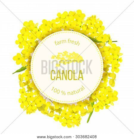 Rapeseed Blossom Flowers. Card Template Text. Round Circle Badge Flowering Canola Or Colza. Brassica