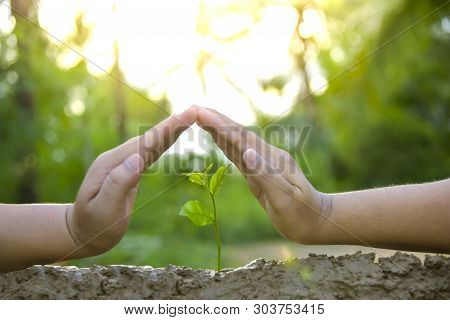 Planting Trees, Loving The Environment And Protecting Nature Nourishing The Plants World Environment