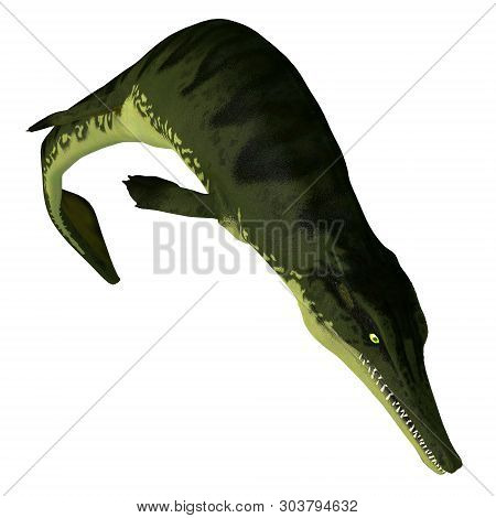 Metriorhynchus Reptile Diving 3d Illustration - Metriorhynchus Was A Carnivorous Aquatic Reptile Tha