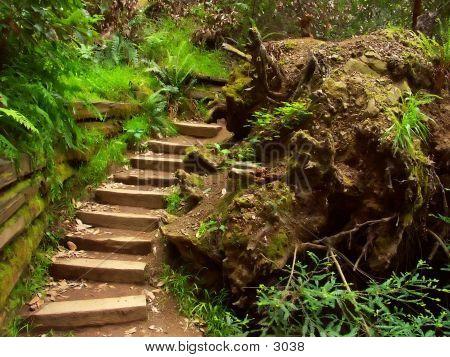 Muir Woods Steps