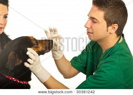 Vet Giving Pill To Dog