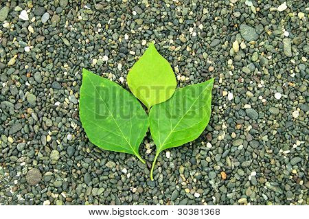 green leaf in the middle of the stone background