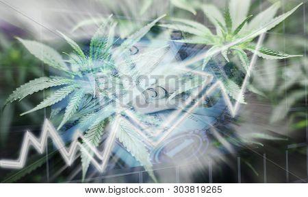 Marijuana Business & Finance Concept High Quality Stock Photo