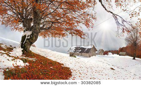 First Autumn Sudden Snow